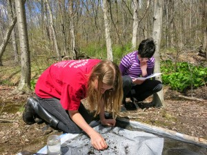 Two teens engaged in macroinvertebrate sampling